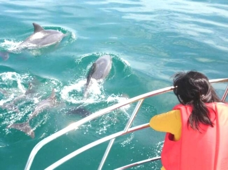 [Kumamoto/Amakusa] Let's go see wild dolphins! Dolphin watching tour
