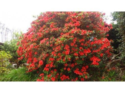 【鹿児島・沖永良部島C、トレッキング  植物散策・森林浴・季節の花めぐり