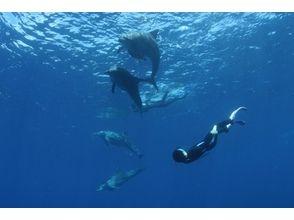【 東京・小笠原】初心者でも楽しめる!イルカ・クジラも会えるかも!!体験ダイビング1日コース!!の画像