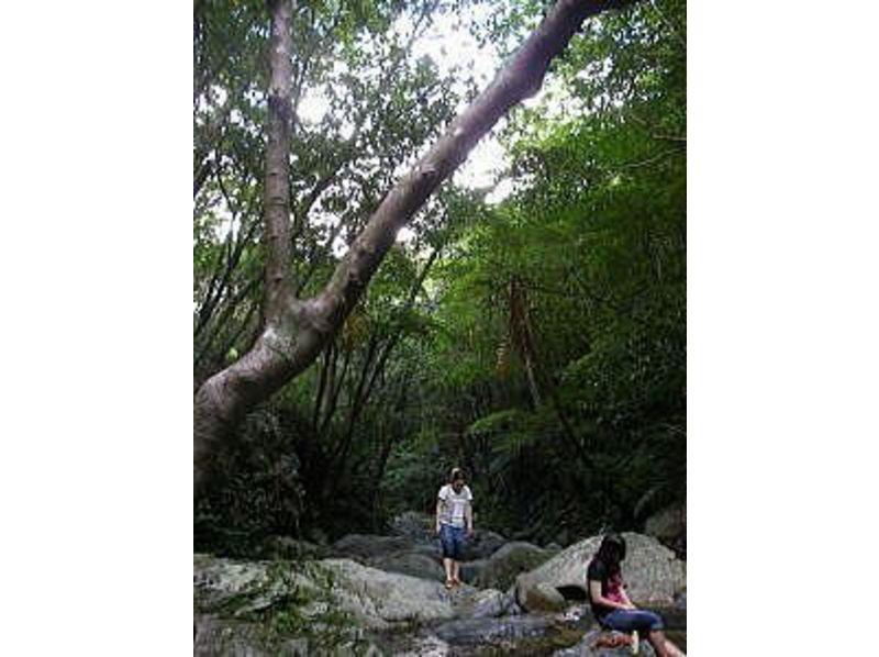 【沖縄・国頭】やんばるの大自然の中をゆったりと散策<リバートレッキングツアー>の紹介画像