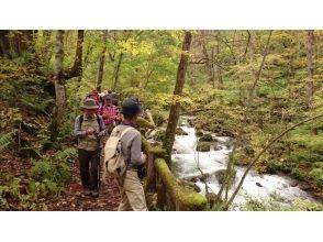 【青森・十和田】奥入瀬渓流トレッキング【十和田湖国立公園】ゆっくりご案内3時間30分コースの画像