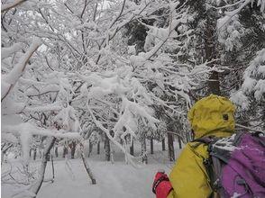 【滋賀・山門湿原】自然豊かな湿原を散策!スノ―シュートレッキング体験(半日コース)