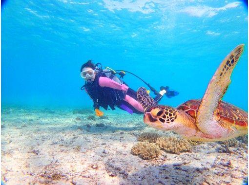 【沖縄・宮古島】体験ダイビングSコース 熱帯魚と泳ぐランチ付ツアー