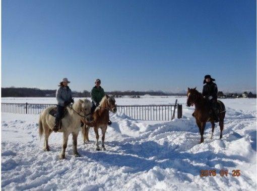 【北海道 ・恵庭】騎馬深入北海道大自然!深度游雪景!(2小時)の紹介画像