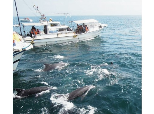 【熊本・天草】本格糸釣りを伝授!水中マイクでイルカの声も聴ける!「イルカウォッチング&釣り体験」