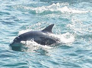 對於海上運動的第一次享受[熊本縣天草]父母和孩子!觀賞海豚和海上獨木舟
