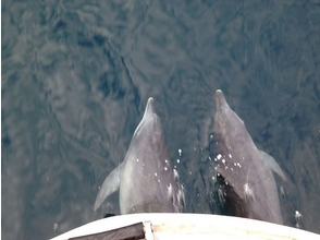 【Kumamoto · Amakusa】 Elephant in Amakusa National Park Rock cruising! Image of dolphin watching & SUP experience