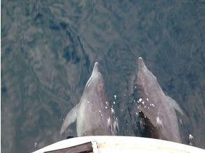 [熊本縣天草]大象岩巡航天草國立公園!觀賞海豚和SUP體驗