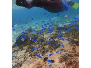 【沖縄・国頭】沖縄の海を独り占め!1グループ限定でのランチ付きシュノーケリングツアー!の画像