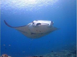[Okinawa / Ishigaki Island] Let's go see the longed-for manta ray by snorkeling!   Underwater camera rental free