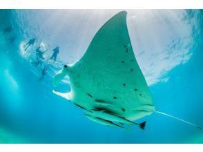 夏季折扣【冲绳/石垣岛】一日游遍石垣岛魅力!蝠鲼、海龟浮潜、蓝洞和瀑布盆地,午餐和电晕措施