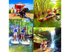 [Iriomote Island] To popular tourist attractions by buffalo cart a7. Mangrove SUP / Canoe x Unexplored Power Spot Tour & Yubu Island Sightseeing Course [Tour photo data free]