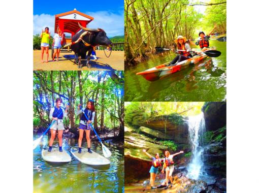 【西表島発】マングローブSUP・カヌー秘境の滝巡り&由布島観光コース【ツアー写真データ無料】