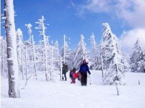 【長野・八ヶ岳】北八ヶ岳・縞枯山に登る!スノーシュートレッキング(ランチ&ハンモック付き)