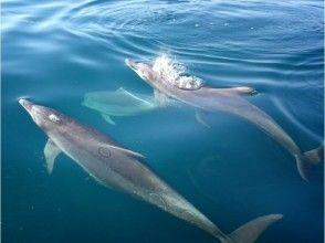 【熊本・天草】お得なセットプラン!ドルフィンクルーズ&釣り船フィッシングの画像