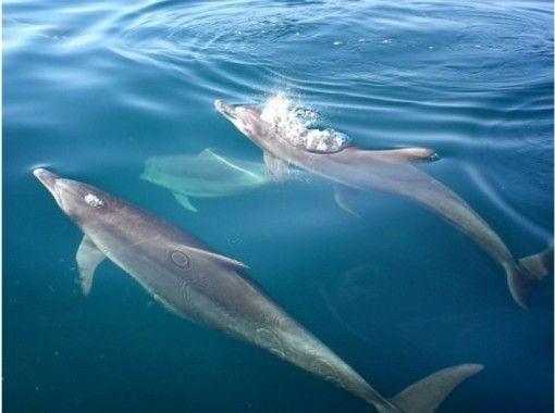Dolphin Cruise (Dolphin Cruise)