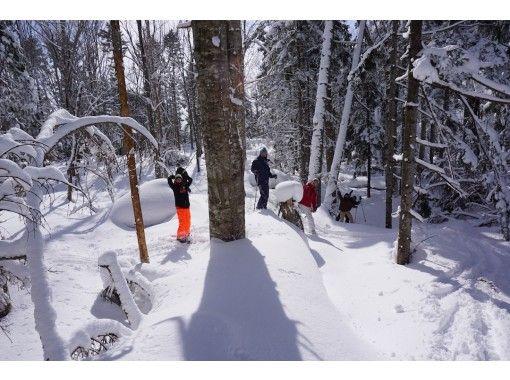 【ニセコ】オリジナルのフィールドで深雪の森を独占!スノーハイク貸切ツアー