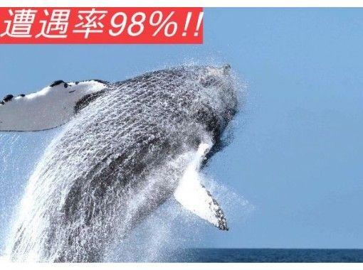 【美ら海水族館近く!北部発】ホエールウォッチングプラン♪●全額返金保証●地域最安値●遭遇率98%