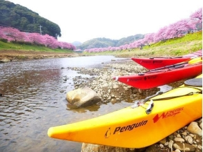 【Shizuoka / Minami Izu】 ★ Spring limited time ★ Kawazu cherry blossom viewing cherry blossoms early! Spring kayak tour