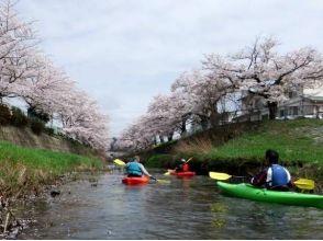 【鳥取・袋川】2017桜の花見カヌー IN 鳥取市袋川