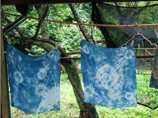 【長崎・草木染め】自然の色に感激!季節の植物で染めよう
