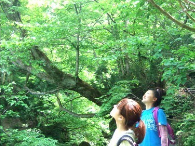 [Toyama and Mt. Tateyama] A therapy guide will guide you! Forest therapy (small course) with snack