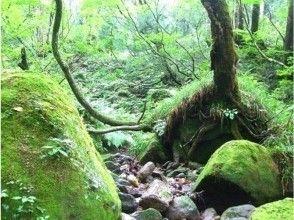 【富山・立山山麓】森林セラピー(リフレッシュコース)