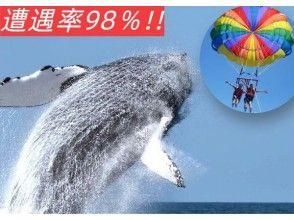 【セットでお得♪】★ホエールウォッチング+絶景!パラセール★●全額返金保証 ●クジラ遭遇率98%