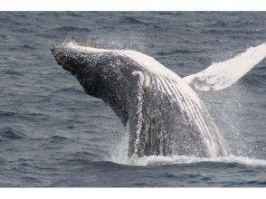【沖縄・瀬底島】ホエールウォッチング&体験ダイビング