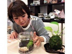 [東京]你可以用不同的苔蘚在一天交互☆享受苔(苔球和苔蘚水晶球)圖像的體驗計劃