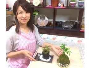 【東京都・苔玉&苔の炭鉢づくり体験】季節の苔玉と苔の炭鉢づくり体験の画像
