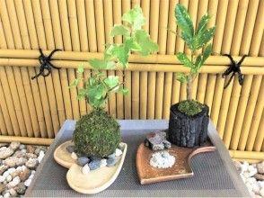 [東京,kokedama製作陶瓷產品體驗]在新宿成真!本賽季(的Sumihachi苔球或苔)的製造與陶器經驗設定圖像的計劃