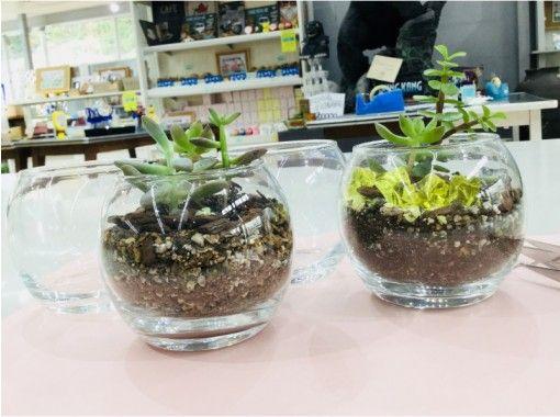 【群馬県・寄せ植え】お部屋を彩ろう!多肉植物の寄せ植え体験