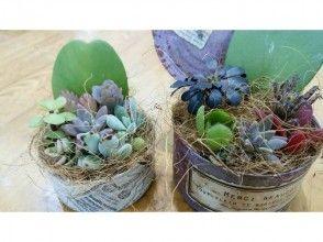 【群馬県・寄せ植え】お部屋を彩ろう!多肉植物の寄せ植え体験の画像