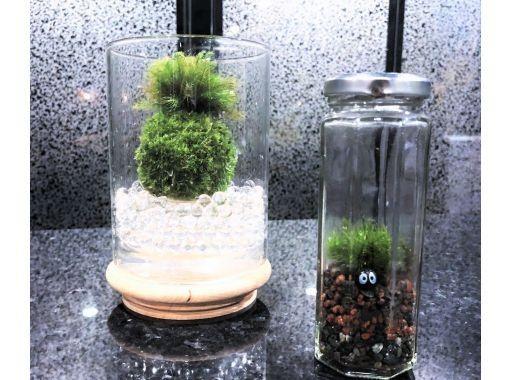 【東京・新宿御苑前駅】天然苔の可愛い苔玉⭐小さな幸せをお届け♪の紹介画像