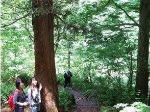 【富山・立山山麓】ノルディックウォーク(立山山麓コース)の画像