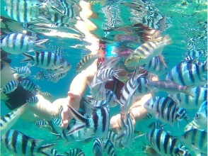 【Okinawa North · Kunigami Village】 Take a boat to a snorkeling point ♪ Let's swim with tropical fish!