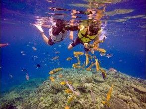[北部和偏遠島嶼] Minnajima令人興奮的小船浮潛和燒烤課程(有2種海洋生物)