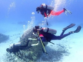 【神奈川・三浦半島】初心者大歓迎!BBQもできる城ヶ島体験ダイビングの画像