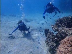 【沖縄北部・ビーチ体験ダイビング】透明度抜群の沖縄で体験ダイビング!コース参加中の写真プレゼントの画像