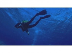 [Hatsushima experience diving 1.5 hours] Beginners welcome! Hatsushima experience diving! Image of