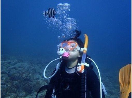 【静岡・伊豆】感動の水中散歩を楽しもう!体験ダイビングコース(平日コース)