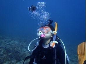 【静岡・伊豆】感動の水中散歩を楽しもう!体験ダイビングコース(土日コース)の画像