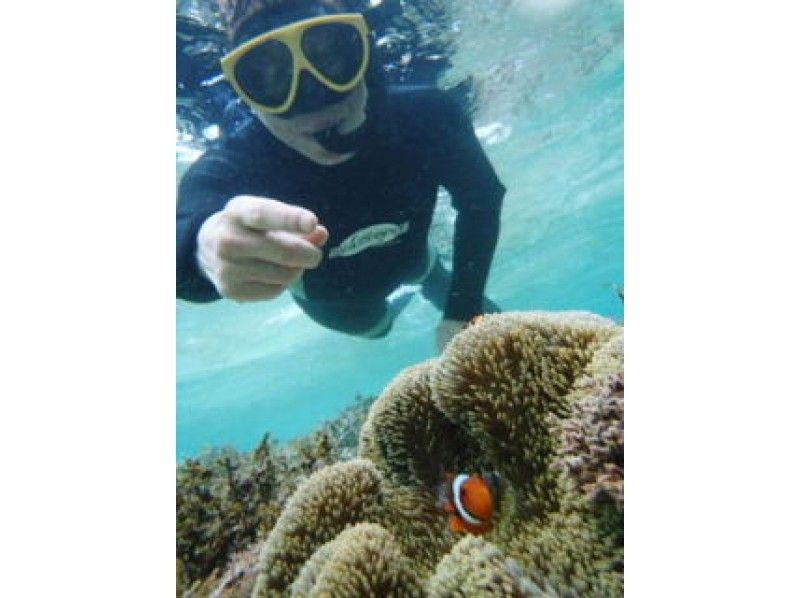 【沖縄・石垣島】シュノーケリングサンゴおさかなを楽しむの紹介画像