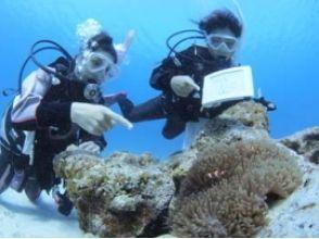 【栃木・宇都宮】海での体験ダイビング(ディスカバー・スクーバ・ダイビング)