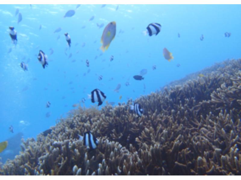 [Okinawa Miyakojima] blue cave snorkeling introduction image