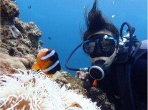 【ボートで行く青の洞窟シュノーケリング&体験ダイビング】ツアー写真プレゼント・餌付け付き・快適なボー