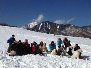 [Yamanashi Yatsugatake] ♪ with dogs and snowshoe hiking ※ lunch box