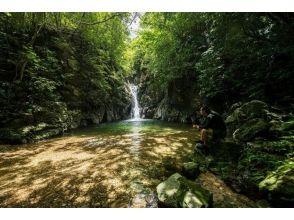 【沖縄県・国頭郡大宜味村】手付かずの滝を目指す中級トレッキングツアーの画像