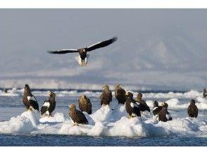 【北海道・知床】冬の知床で圧巻の風景に出会う。流氷クルージング&バードウォッチング 撮影コースの画像